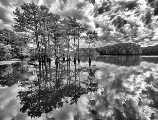 The Cypress trees of Caddo Lake