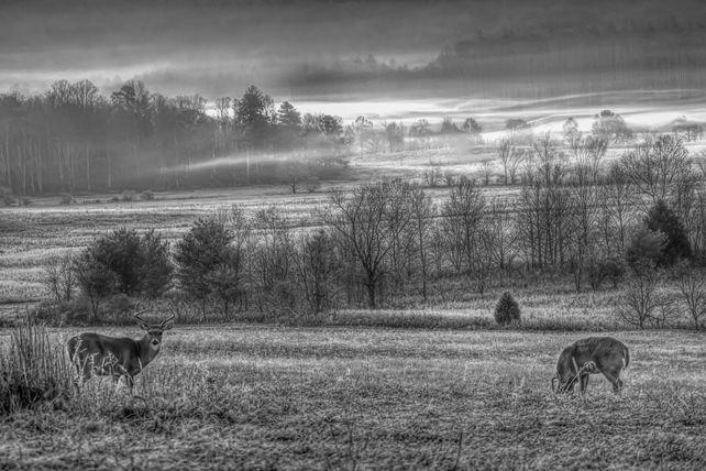 Frosty Morn in B & W