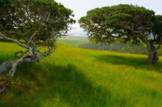 Arroyo Laguna Oaks Vista  Fine Art Photo Big Sur