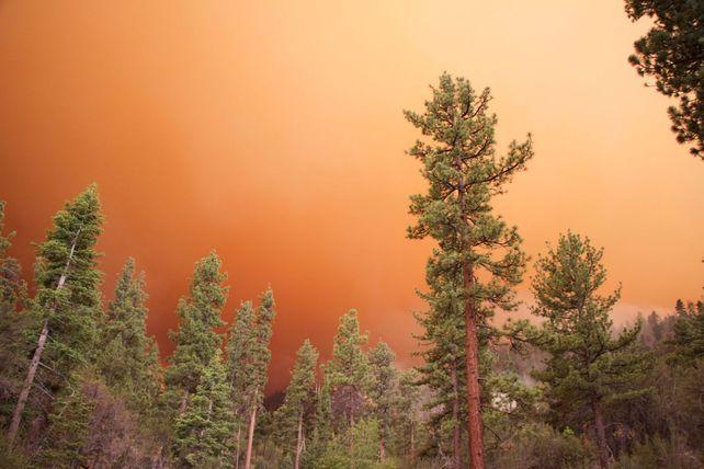 Lake Fire - Orange Gradient