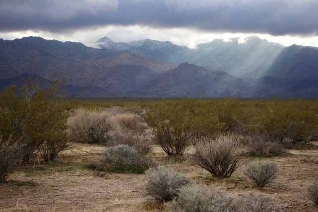 Mojave Sunbeam #3