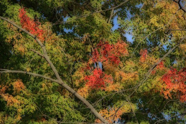 Painted Trees, Lake Arthur