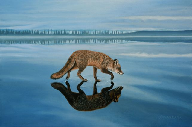Old Fox on Thin Ice