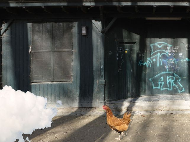 Mysterious Chicken NEW
