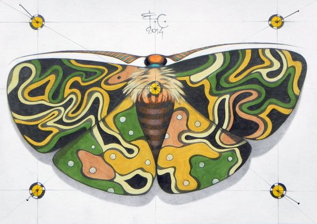 mimetic butterfly