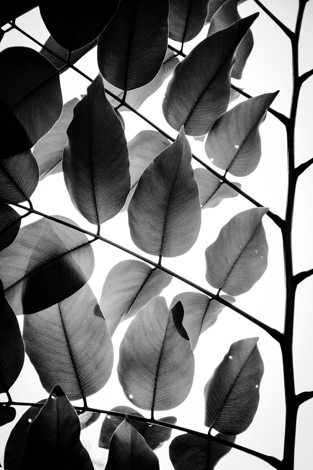 Branches and Leaves II