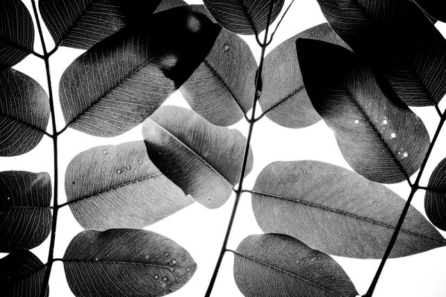 Experiments with Leaves II