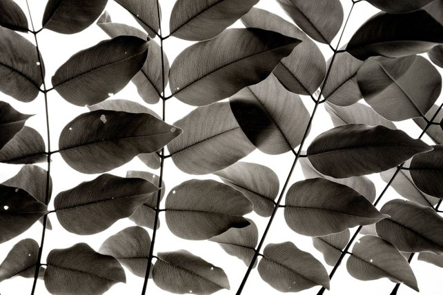 Branches and Leaves I