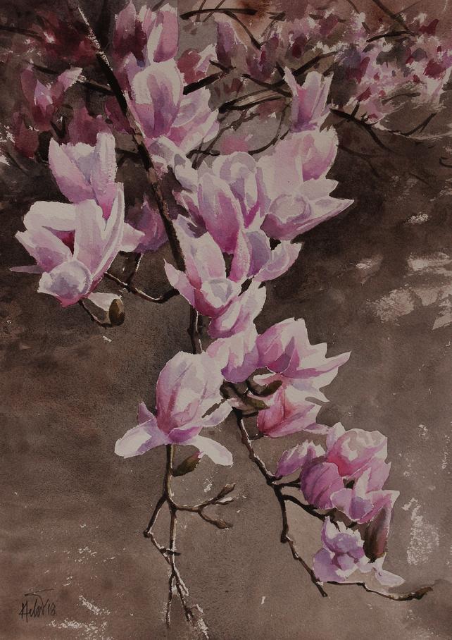 Magnoliam