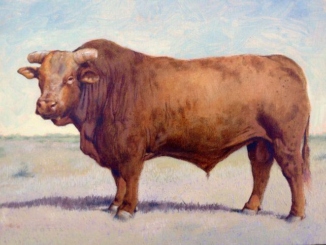 Braford Bull