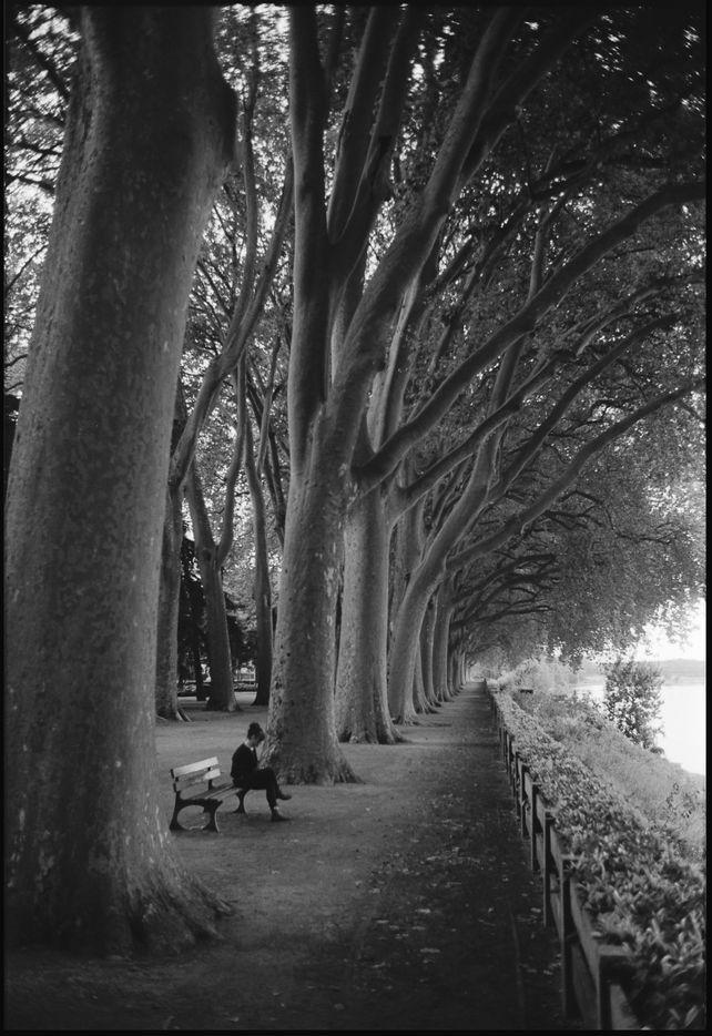 Edition 2/10 Treeline, Chinon, France