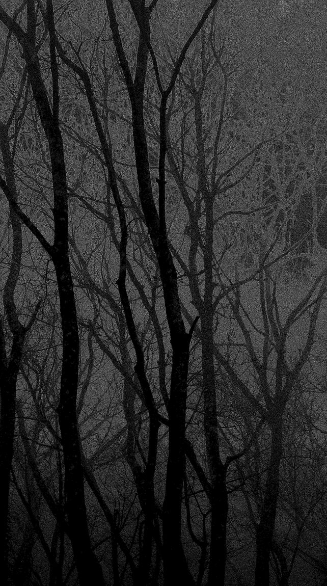 The Language of Trees 420 / b&w drawing