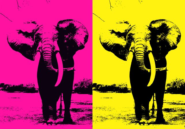 Two Elephant - In Pink & Yellow