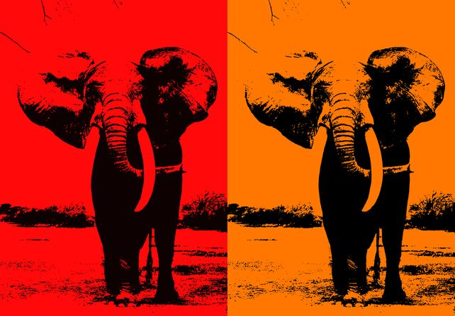 Two Elephant - In Orange & Red Orange