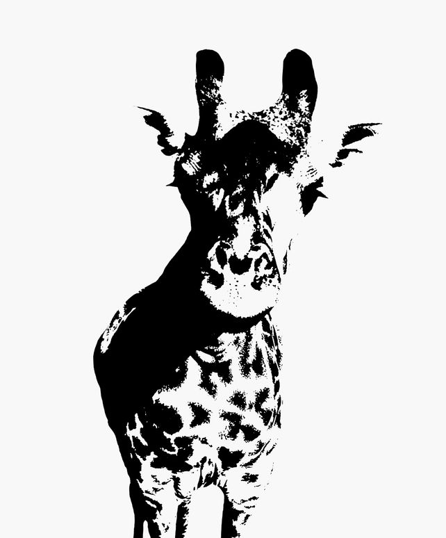 Giraffe - In Black & White