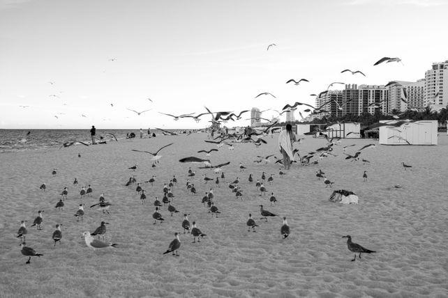 """Birds"" Aka (Miami Beach Birds)"