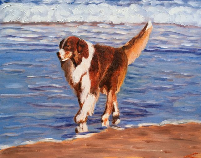 Dog at the sea