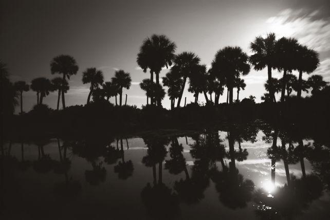 Reflecting Palms