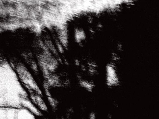 Night Trees
