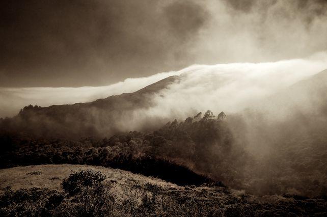 Marine Fog - Marin County