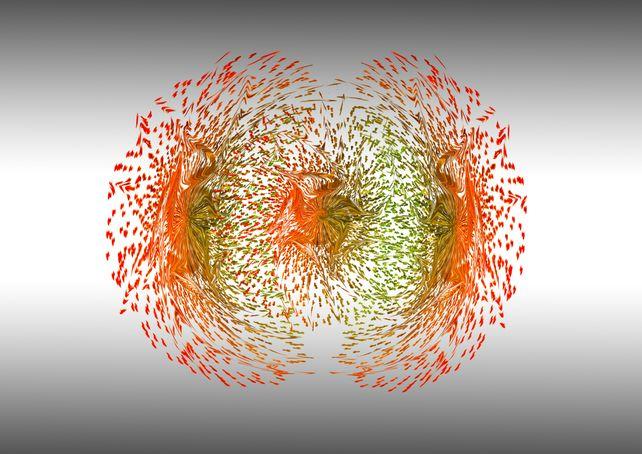 Secret life of seeds - Mitosis