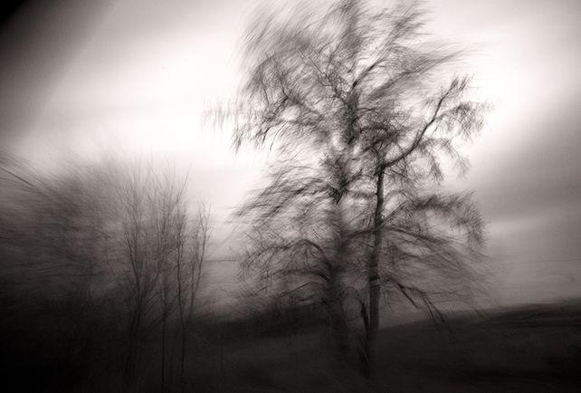 One Tree, Spain