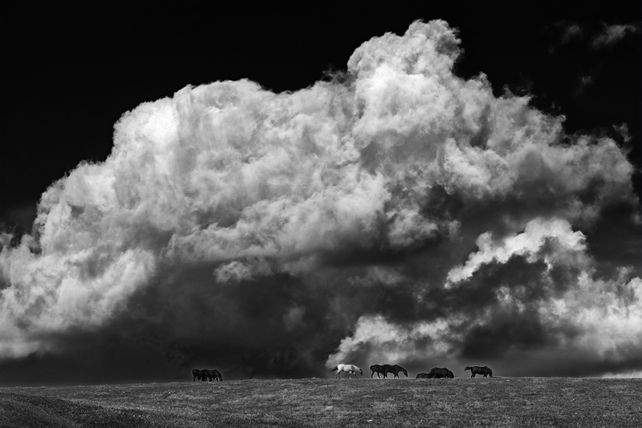 'Billowing Clouds and Horses' by Mike Grandmaison