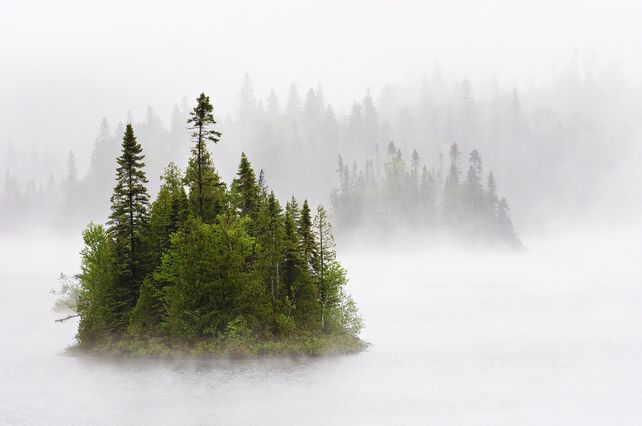 'Trees in the Mist' by Mike Grandmaison