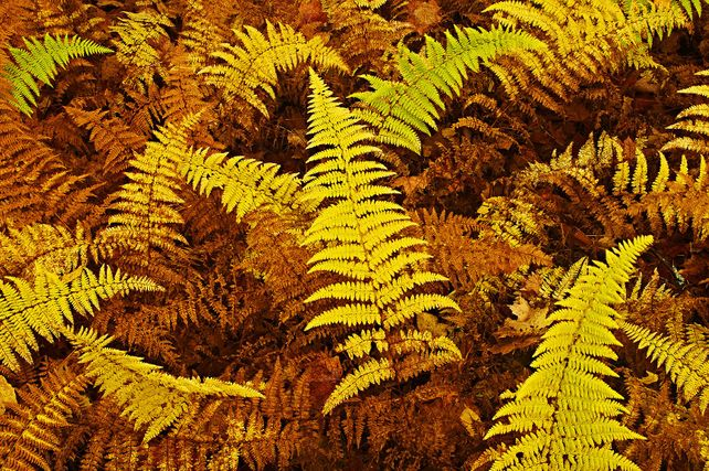 'Wood Ferns' by Mike Grandmaison