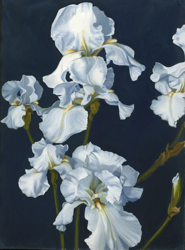 White Iris, Midnight