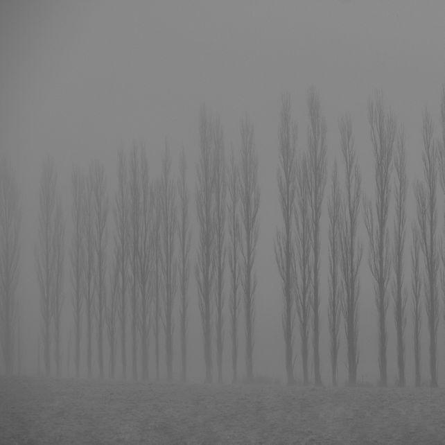 Forest of Regret