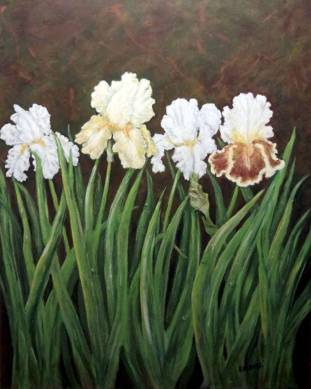 Four Iris