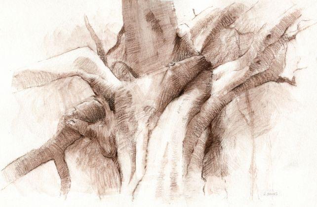 The Old Oak Tree