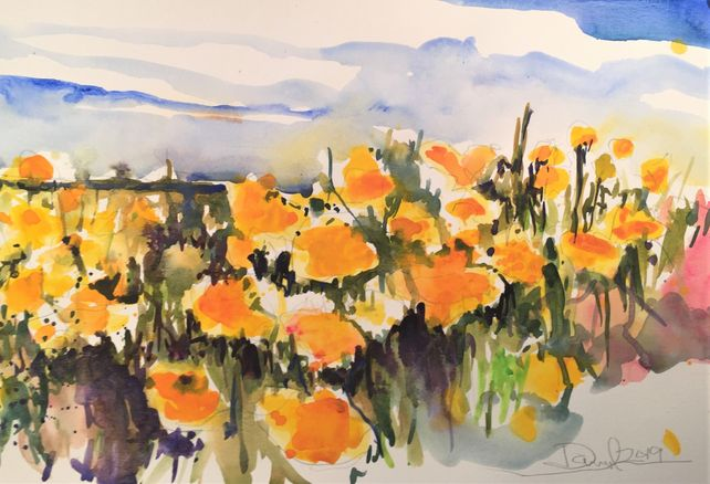 SoCal Poppies Last Call