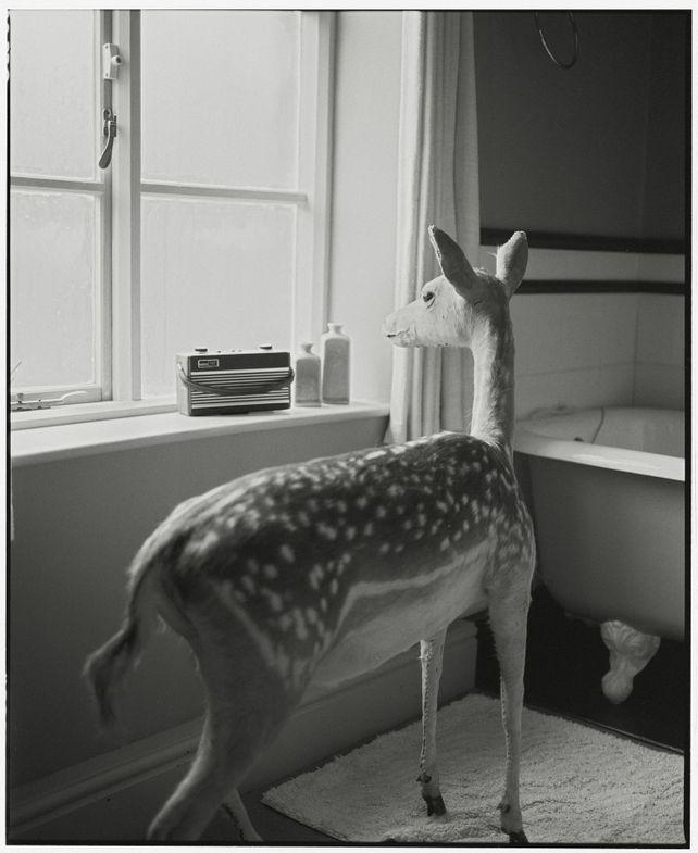 Deer In The Bathroom-2 (medium size)