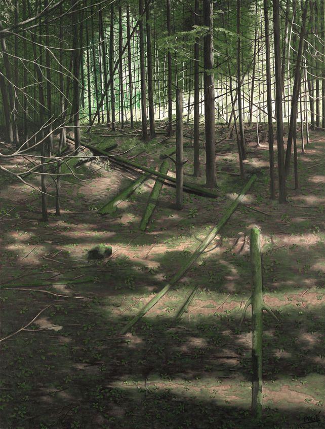 , Moss on Wood'