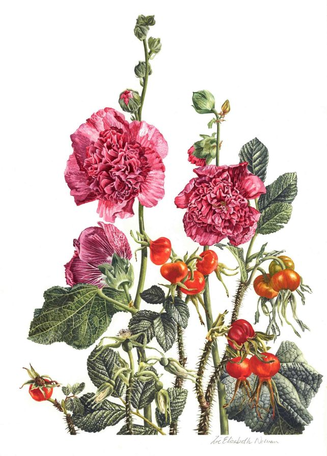 Hollyhocks & Rosa Rugosa