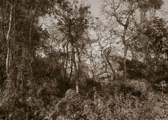 The Soul of Trees II