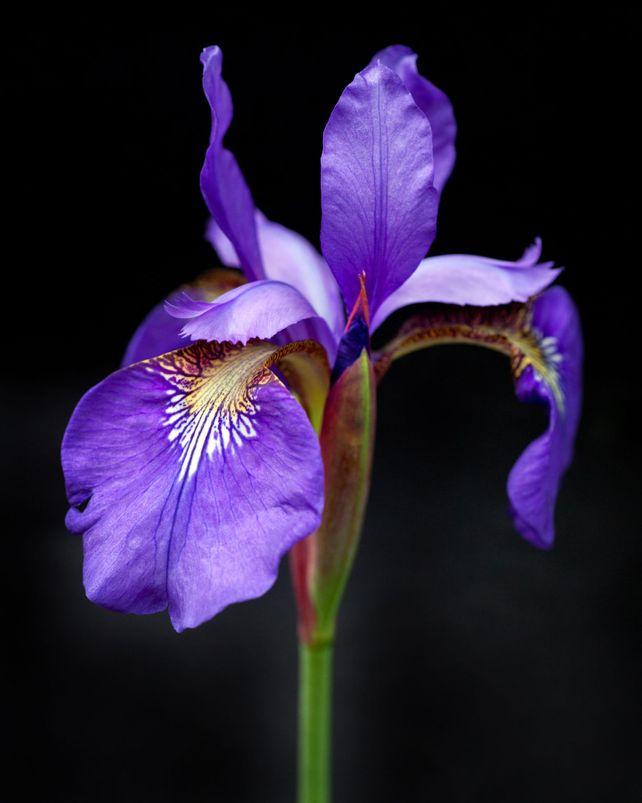 Botanical 47