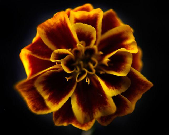 Botanical 56