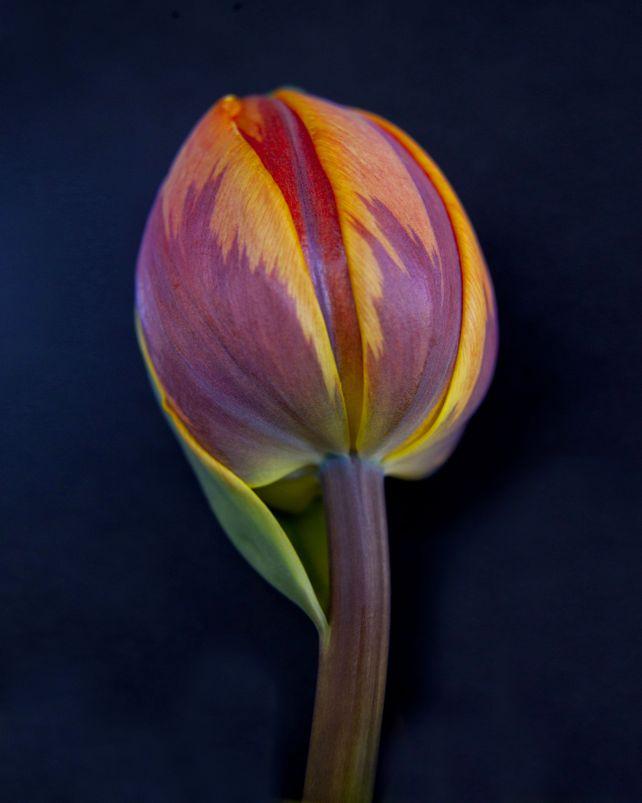 Botanical 50