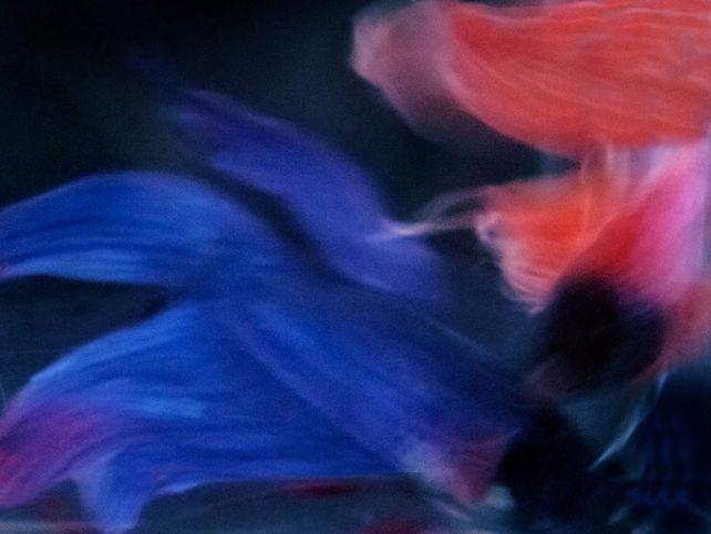 Beta Blur 6
