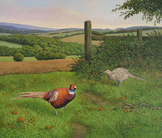 FORAGING PHEASANTS