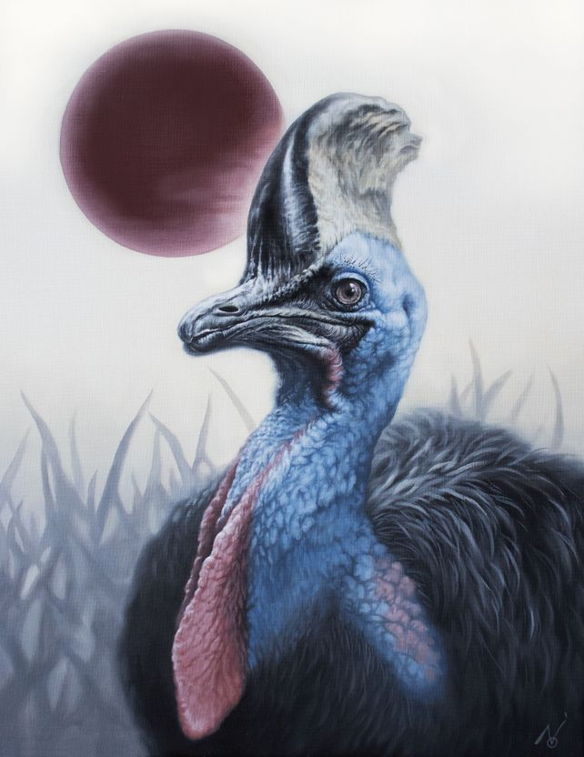 Legendary Blue / Cassowary