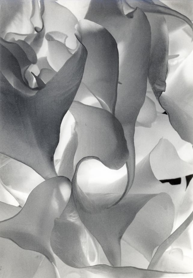 Double White In Black And White III