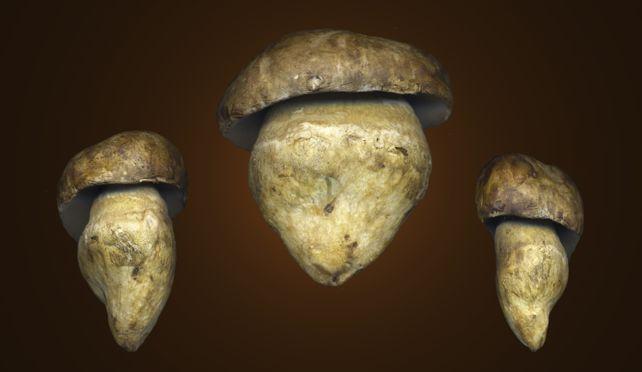 Porcini Mushrooms  X 3