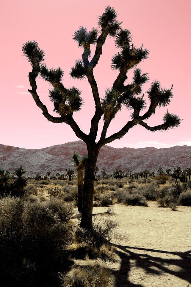 DESERT SHADOWS - PINK