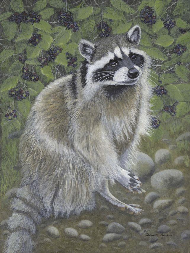 Blackberry Patch (Raccoon)