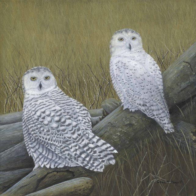 Boundary Bay (Snowy Owls)