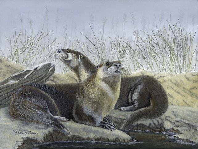 River's Edge (River Otters)